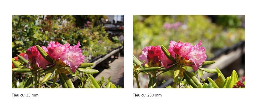 cac-yeu-khien-buc-anh-nhoe-mo_photozone-com-vn-3.