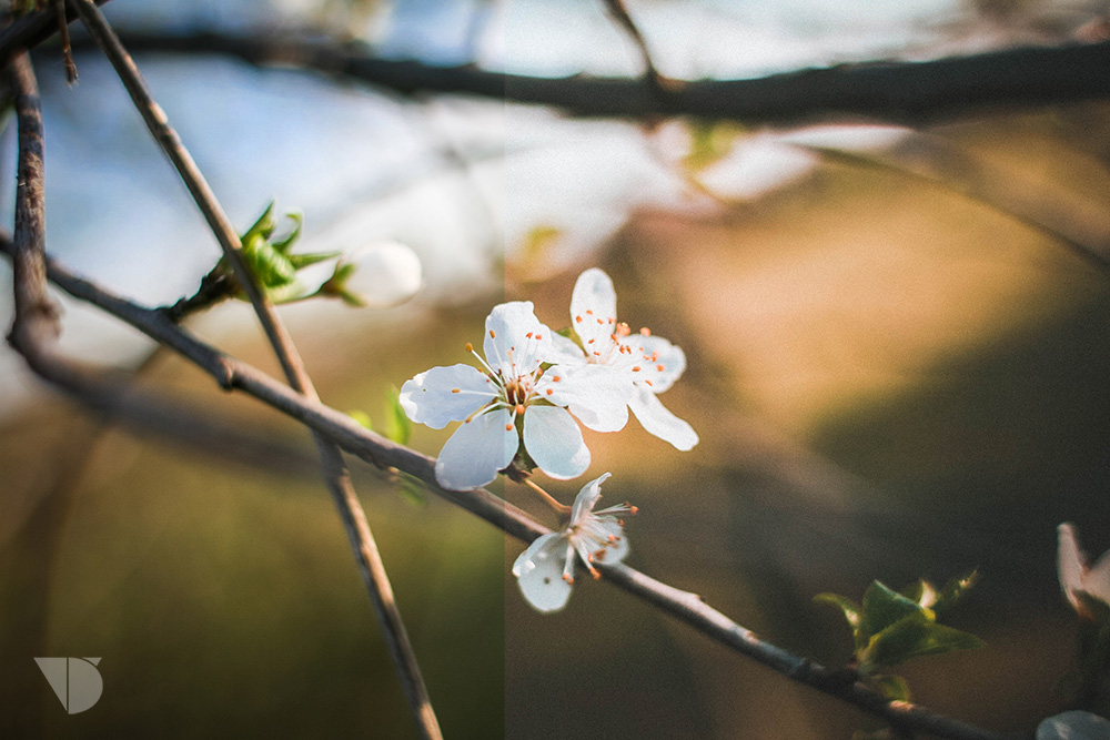 first-spring-blooms-picjumbo-com.