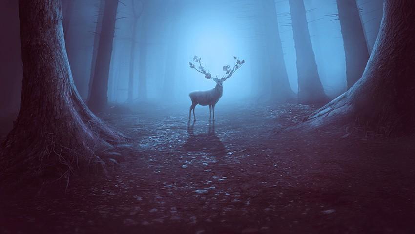 Cách tạo ra một cảnh rừng huyền bí với Adobe Photoshop