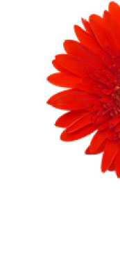 red_half_flower3.