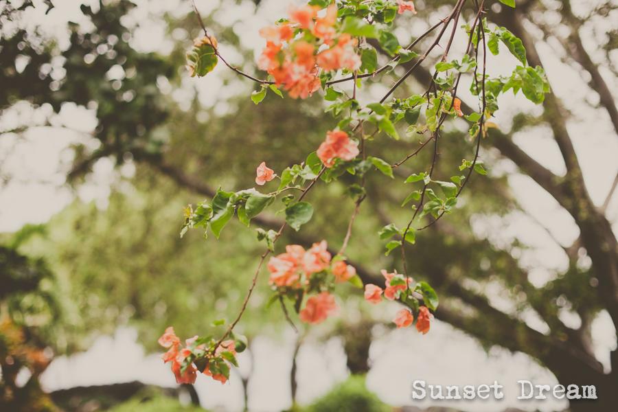 Sunset-dream-1-2.