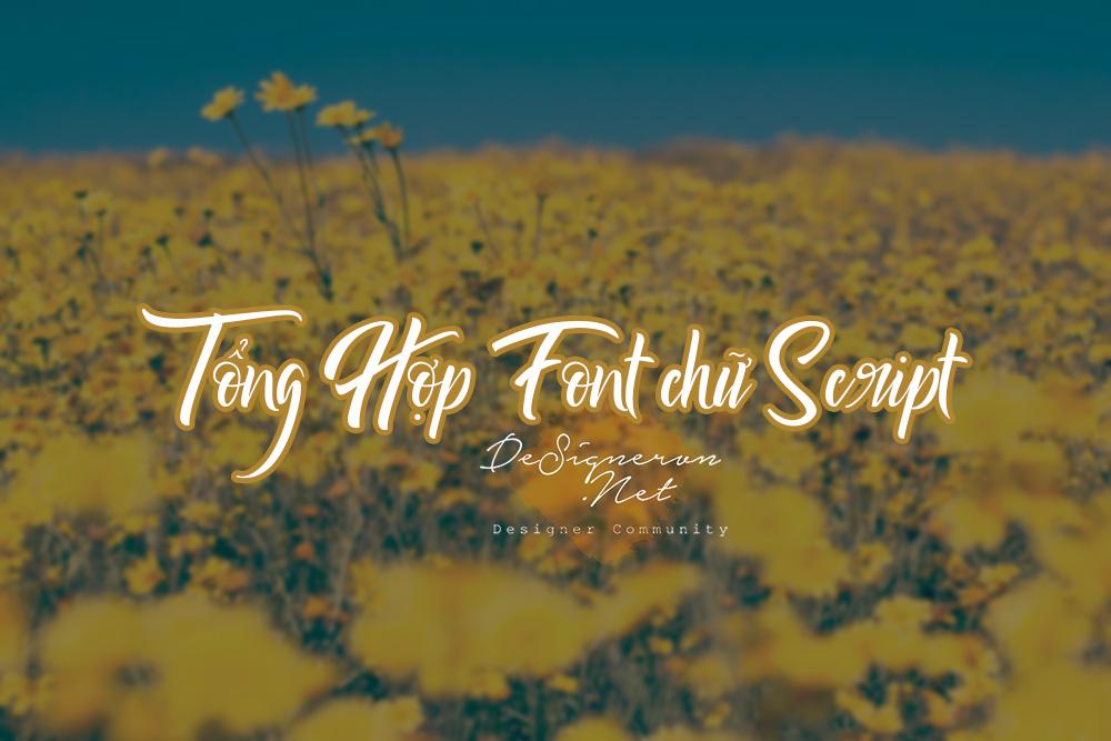 tong-hop-font-chu-script-designervn.